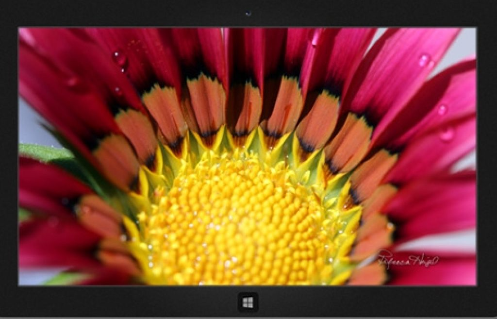 Summer_Blooms_Windows_Theme_Download